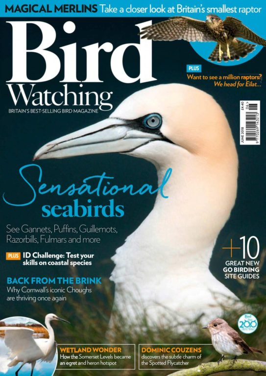 Bird Watching UK – June 2018