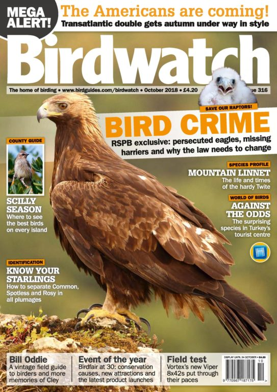 Birdwatch UK – October 2018