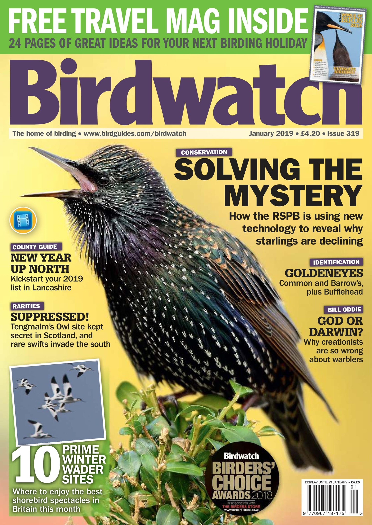 Birdwatch UK – January 2019