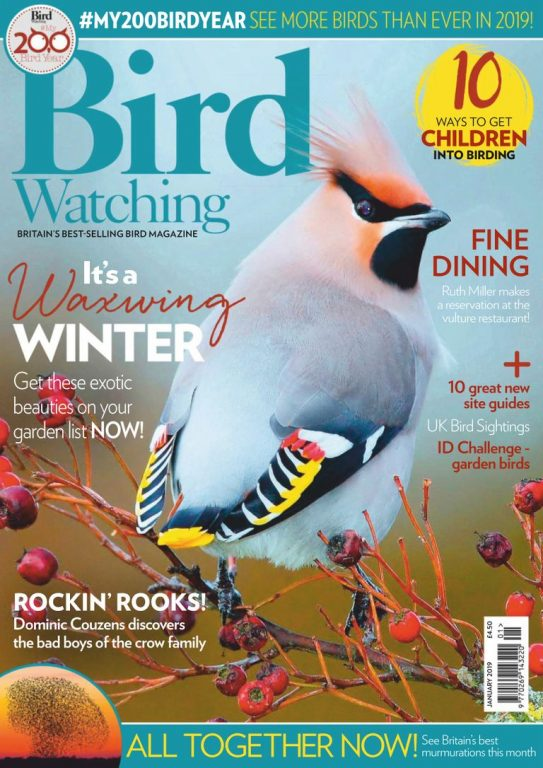 Bird Watching UK – January 2019