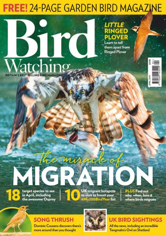 Bird Watching UK – April 2019