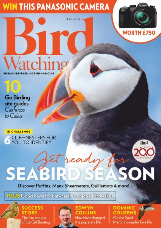 Bird Watching UK – June 2019